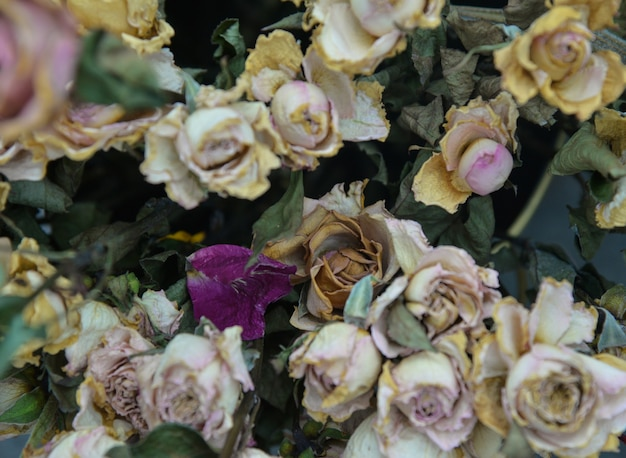 Gedroogde bloemen achtergrond