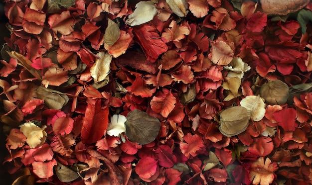 Gedroogde bloemen en bladruimte