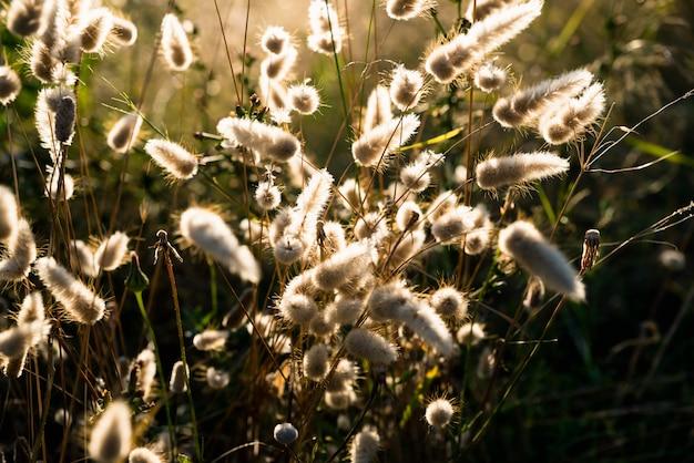 Gedroogde bloemen in het veld verlicht door een intense zon in de zomer.