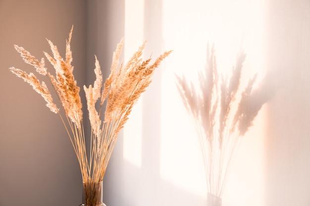 Gedroogde bloemen met schaduwen tegen een lichte muur