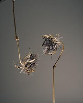 Gedroogde bloemen van blauwkoperyngium hangen naar beneden en strekken zich naar elkaar uit voor een kus. bloemen in liefde. mooie sfeervolle bloemen wenskaart concept op donkere achtergrond met kopie ruimte.