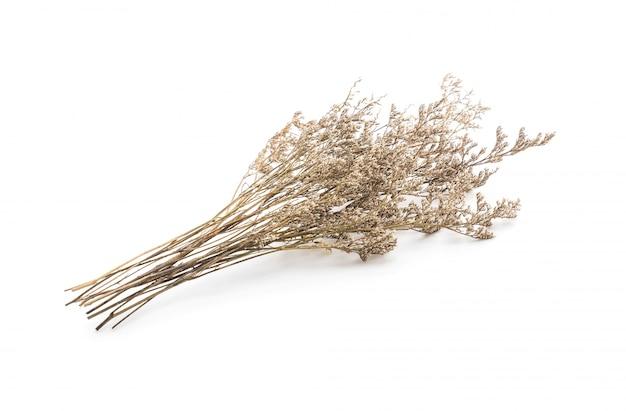 Gedroogde caspia bloemen