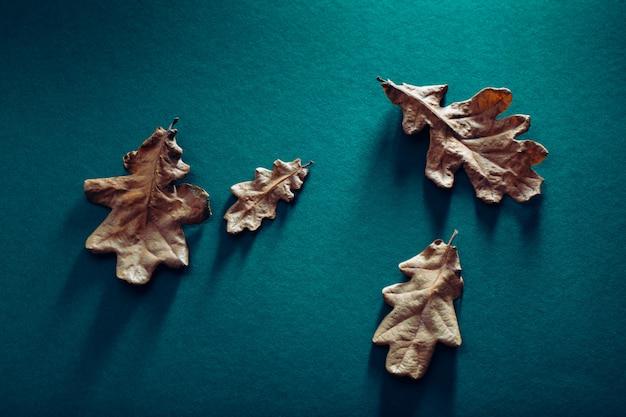 Gedroogde eikenbladeren op blauw
