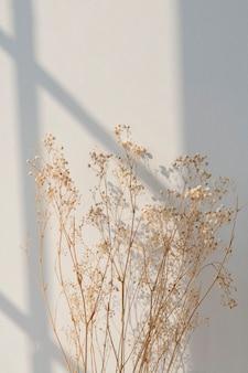Gedroogde gipskruid met raamschaduw op een beige muur