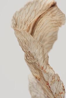 Gedroogde leliebloem op een grijze macro-opname als achtergrond