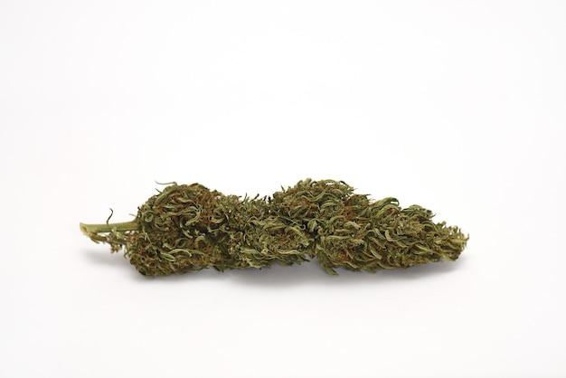 Gedroogde medicinale marihuanabloem op wit, acdc-variëteit
