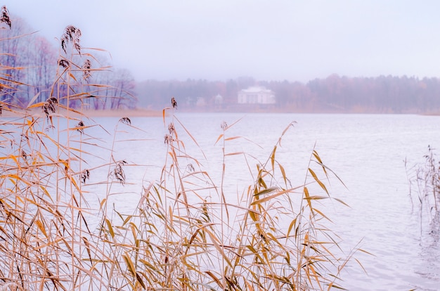 Gedroogde planten op de oever van het meer