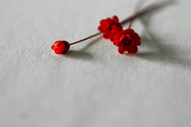 Gedroogde rode bloemen op papier of ambachtelijke bloemen. boek en droog kleine bloemen.