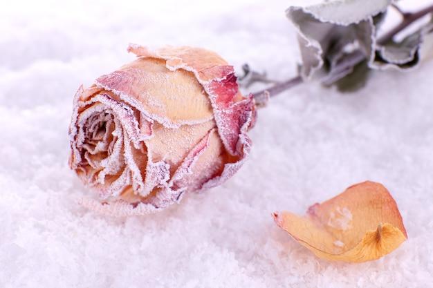 Gedroogde roos bedekt met rijm op sneeuw close-up