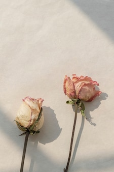 Gedroogde roze en witte rozen met een raamschaduw