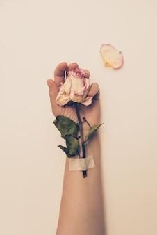 Gedroogde rozen in de hand van een oudere vrouw. dramatische toning