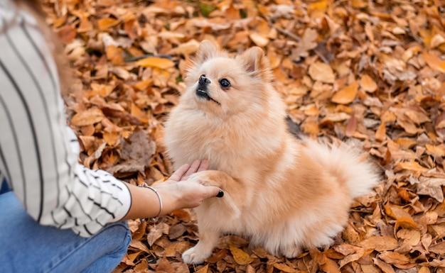 Geef me een vijf puppy drukt een poot tegen het meisje