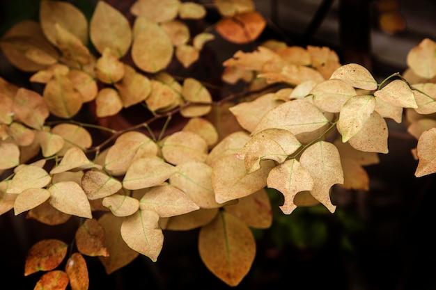 Geel blad op boom in de herfstseizoen voor aard