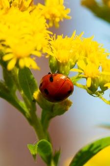 Geel bloemblaadje met lieveheersbeestje onder blauwe lucht