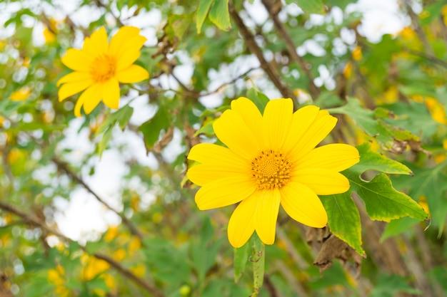 Geel bloemgebied