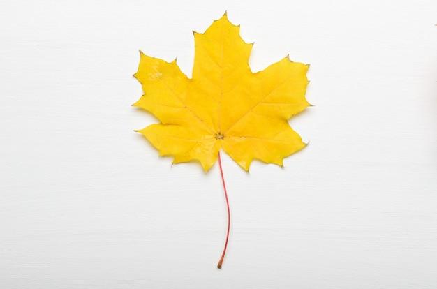 Geel de esdoornblad van de herfst op witte achtergrond
