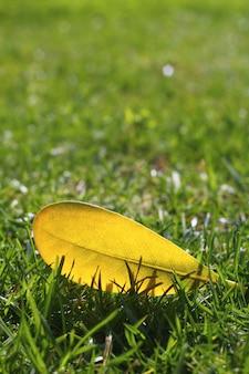 Geel de herfstdalingsblad op gazon van het tuin het groene gras