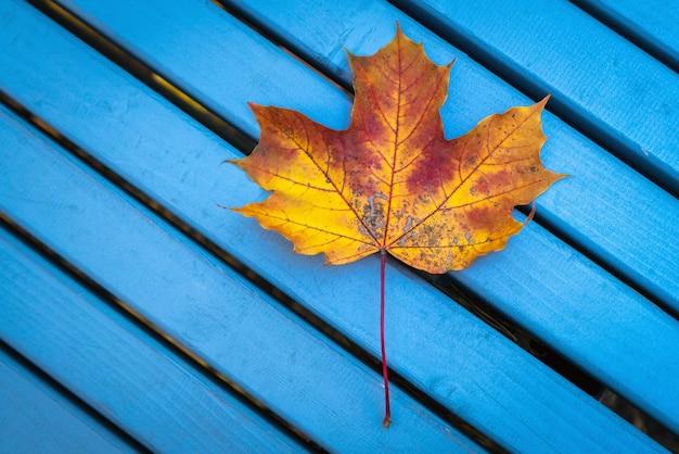 Geel de herfstesdoornblad op blauwe houten bank.