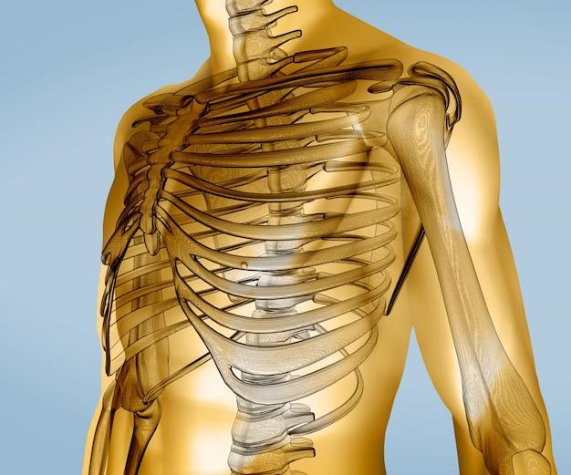 Geel digitaal lichaam met zichtbaar skelet