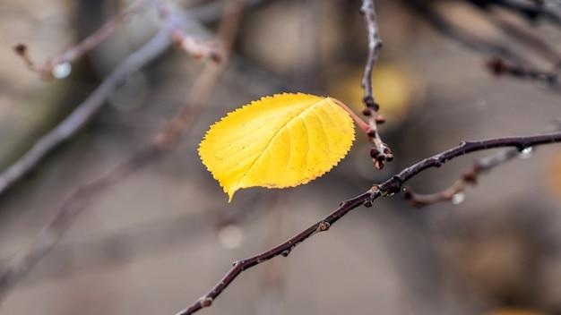 Geel eenzaam de herfstblad op een boomtak. verdriet in de herfst
