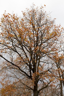 Geel en oranje gebladerte aan bomen in de herfst