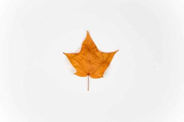 Geel esdoornblad dat op witte achtergrond wordt geïsoleerd. herfst concept