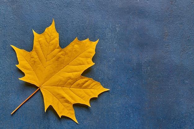 Geel esdoornblad op blauwe achtergrond