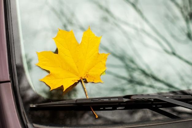 Geel esdoornblad op een autoglas