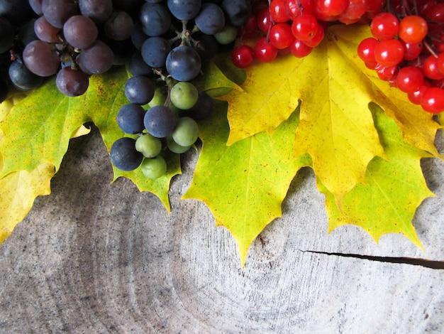 Geel gevallen esdoorn laat trossen zwarte druiven en rode bessen van viburnum achter op de stronk herfst