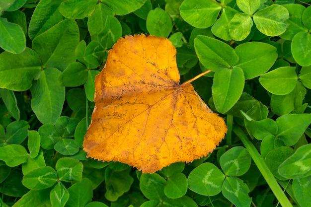 Geel gevallen herfstblad op groene klaver close-up