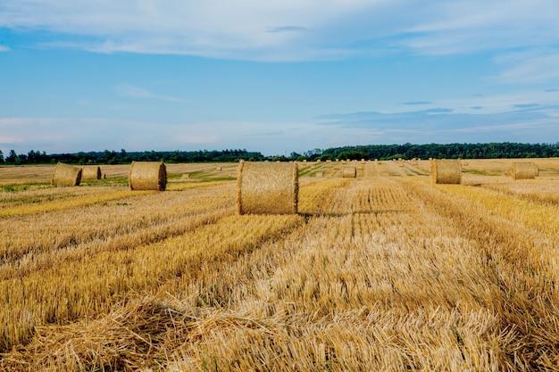 Geel gouden strobalen hooi in het stoppelveld, landbouwgebied onder een blauwe hemel met wolken. stro op de weide. platteland natuurlijk landschap. graanoogst, oogsten.