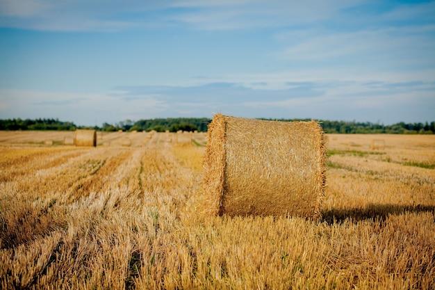 Geel gouden strobalen hooi op het stoppelveld, landbouwgebied onder een blauwe hemel met wolken.