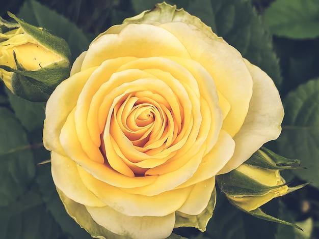 Geel groeien nam close-up toe