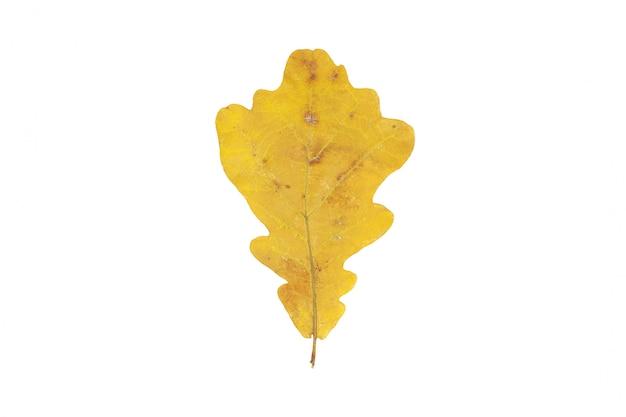 Geel herfst eikenblad