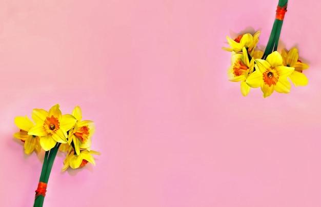 Geel narcissenboeket op lange minimalistische banner mooie panoramische jonquille bloemenkop