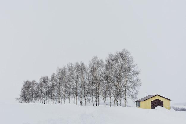 Geel plattelandshuisje met rij van bomen tijdens sneeuwval op de winterdag