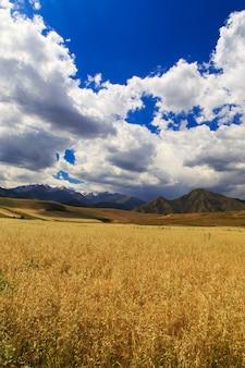 Geel tarweveld tegen de achtergrond van bergen en blauwe hemel