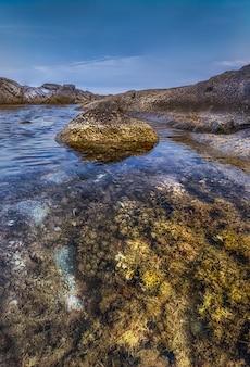 Geelachtige flora van de middellandse zee in een rotsachtige kust met kalme wateren & blauwe hemel in playa de aro, spanje