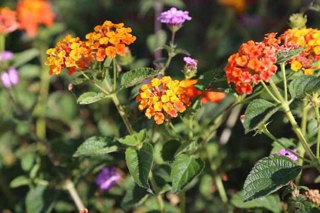 Geelgouden bloemveld onder het daglicht van het zomerseizoen gratis foto