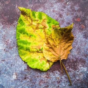 Geelgroene bladeren op kleurrijke oppervlakte