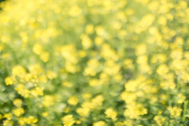 Geelgroene bloemenbokehachtergrond, lensonduidelijk beeld