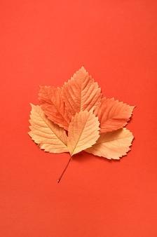 Gefeliciteerd ansichtkaart handgemaakt van kleurrijke herfstbladeren op een koraalachtergrond met zachte schaduwen, kopieer ruimte. plat leggen.
