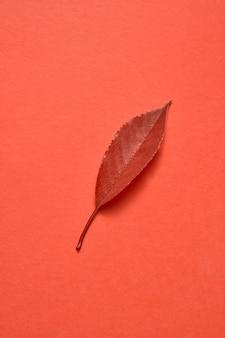 Gefeliciteerd ansichtkaart van kleurrijk herfstblad op een koraalachtergrond met kopieerruimte. plat leggen. minimaal begrip.