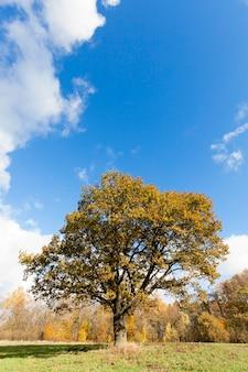 Gefotografeerde bomen en natuur in de herfst van het jaar, vergeelde vegetatie en eiken