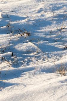 Gefotografeerde close-up onder een hoek van sneeuw na een sneeuwval. de foto toont dood gras