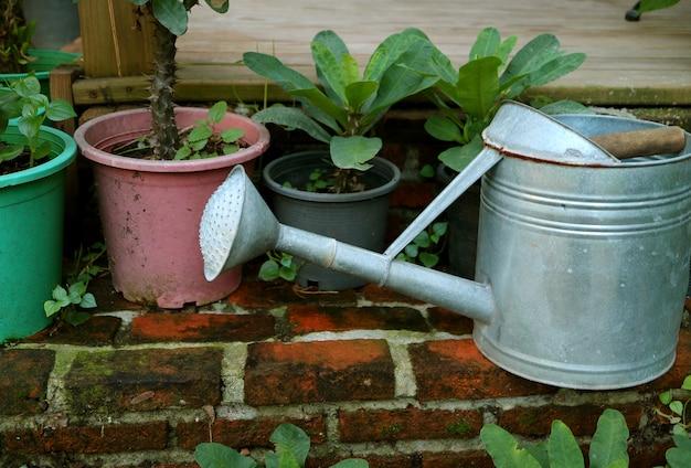 Gegalvaniseerde gieter en veel van groene planten in de plantenbakken