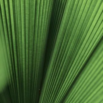 Gegolfde blad palmboom achtergrond
