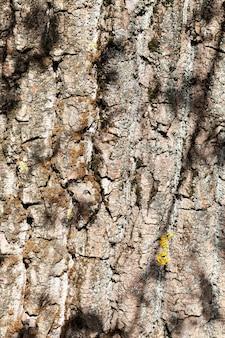 Gegolfde boomschors met mos en korstmos, schaduw van gebladerte, zonnig weer