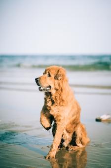 Gehandicapte hond zittend op het strand