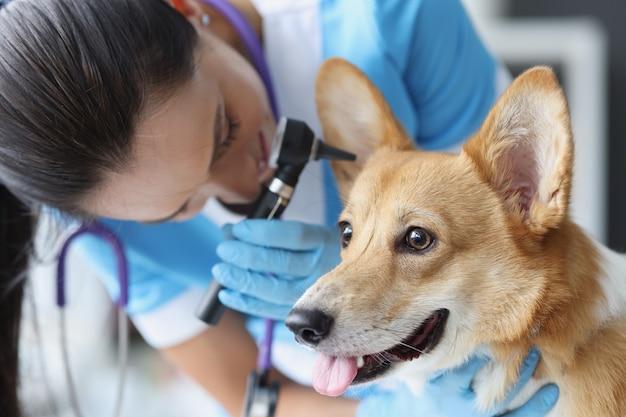 Gehoortest van hond in veterinaire kliniek ziekten van oren bij honden concept